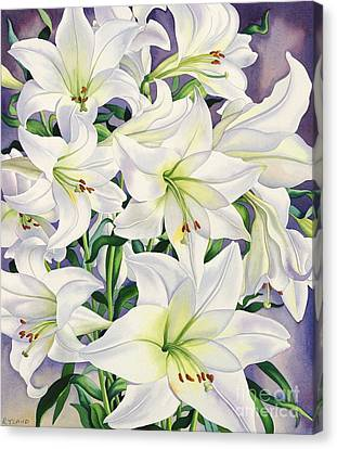 Horticultural Canvas Print - White Lilies by Christopher Ryland