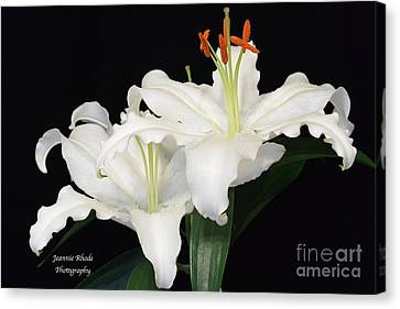 Canvas Print featuring the photograph White  Lilies by Jeannie Rhode