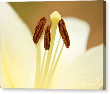 Canvas Print featuring the photograph White Lily #2 by Lisa L Silva
