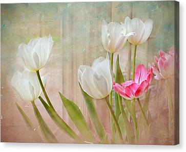 White Lily Show Canvas Print
