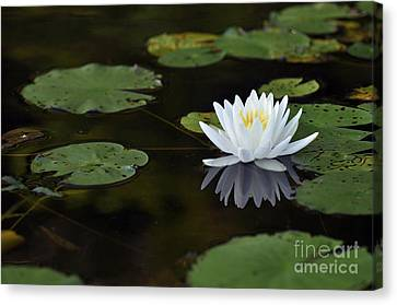 Canvas Print featuring the photograph White Lotus Lily Flower And Lily Pad by Glenn Gordon