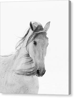 White Mare In The Snow Canvas Print