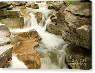 White Mountain Stream Canvas Print by Alana Ranney