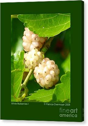 White Mulberries-i Canvas Print by Patricia Overmoyer