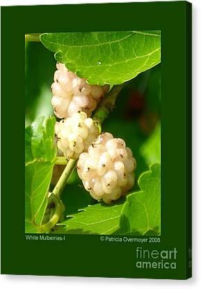 White Mulberries-i Canvas Print