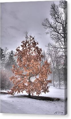 White Oak In Fog Canvas Print