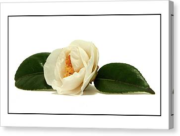 Canvas Print featuring the photograph White On White by Ron Roberts