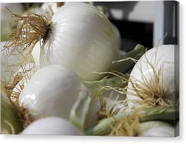 White Onions Canvas Print by Terry Horstman