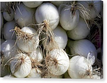 Farm Stand Canvas Print - White Onions by Tony Cordoza