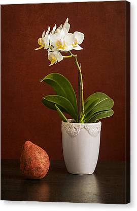 White Orchid Canvas Print by Eduard Moldoveanu