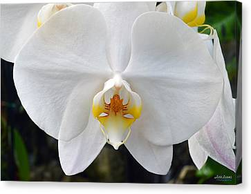 Canvas Print featuring the photograph White Orchid by Aloha Art