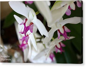 white Orchid from Obove  Canvas Print