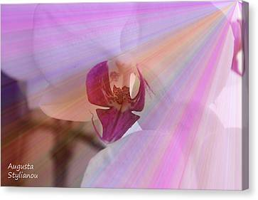 White Orchid In Rays Canvas Print
