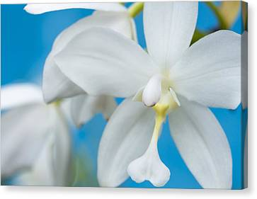 Canvas Print featuring the photograph White Orchid by Leigh Anne Meeks
