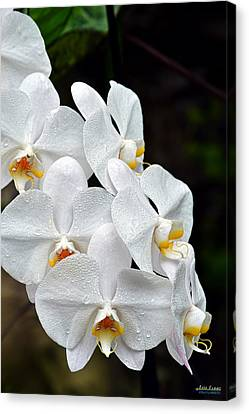 Canvas Print featuring the photograph White Orchids After The Rain by Aloha Art