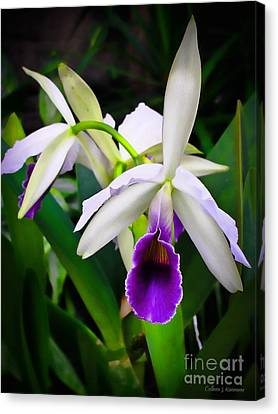 White Orchids Canvas Print by Colleen Kammerer