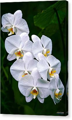 Canvas Print featuring the photograph White Orchids by Aloha Art