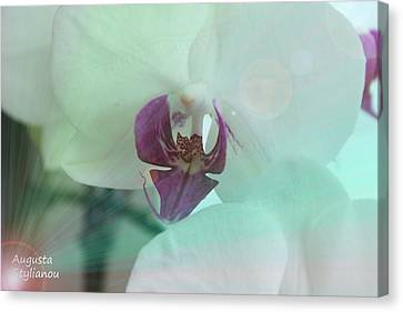 White Orchids In Rays Canvas Print