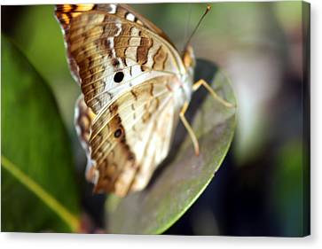 Canvas Print featuring the photograph White Peacock Butterfly by Greg Allore