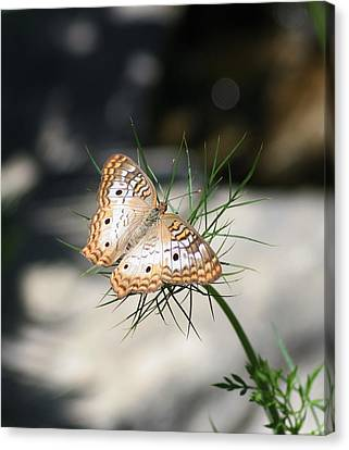 Canvas Print featuring the photograph White Peacock by Karen Silvestri