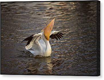 Canvas Print featuring the photograph White Pelican by Sharon Jones