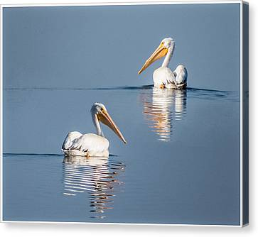 Canvas Print featuring the photograph White Pelicans by Patti Deters
