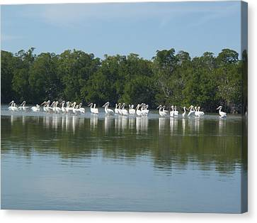 Canvas Print featuring the photograph White Pelicans by Robert Nickologianis