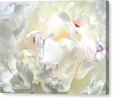 White Peony Canvas Print by Will Borden