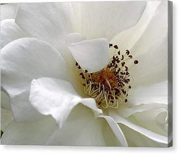 Canvas Print featuring the photograph White Petals by Michelle Joseph-Long
