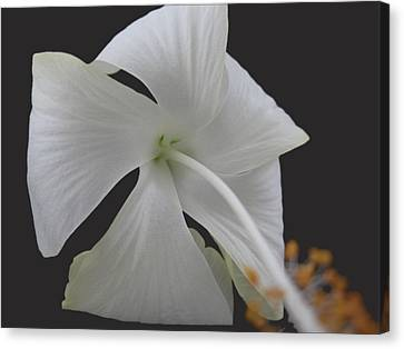 White Petals Canvas Print by Rohit Jadav