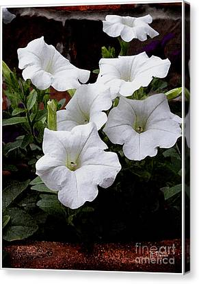 Canvas Print featuring the photograph White Petunia Blooms by James C Thomas