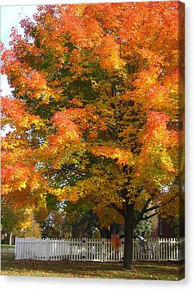 White Picket Fence And Friend Canvas Print by Guy Ricketts