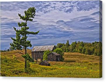 White Pine And Old Barn Canvas Print by Gary Hall