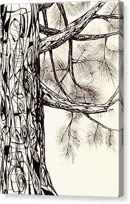 White Pine Canvas Print by Andrea Carroll