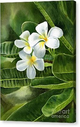 White Plumeria Flowers Canvas Print by Sharon Freeman
