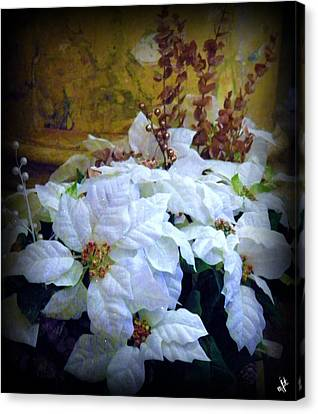 Canvas Print featuring the photograph White Poinsettia by Michelle Frizzell-Thompson