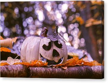 Canvas Print featuring the photograph White Pumpkin by Aaron Aldrich
