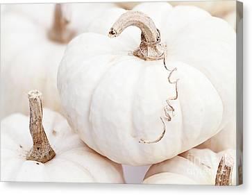 White Pumpkin Macro Canvas Print