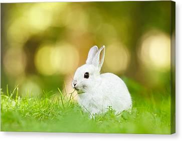 White Rabbit Canvas Print by Roeselien Raimond