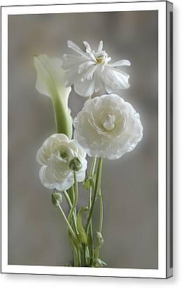 White Ranunculus  Canvas Print by Geraldine Alexander