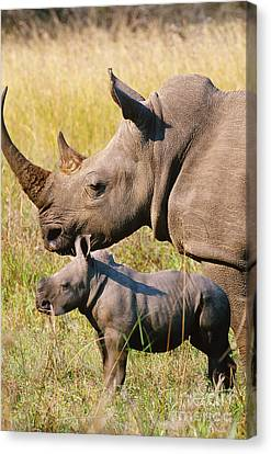 White Rhino Mother And Young Canvas Print