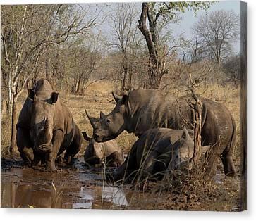 White Rhinoceros Ceratotherium Simum Canvas Print by Panoramic Images