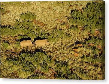 White Rhinoceros (ceratotherium Simum Canvas Print by Pete Oxford