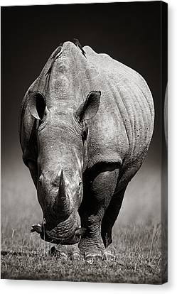 White Rhinoceros  In Due-tone Canvas Print by Johan Swanepoel