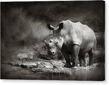 Terrain Canvas Print - White Rhinoceros by Johan Swanepoel