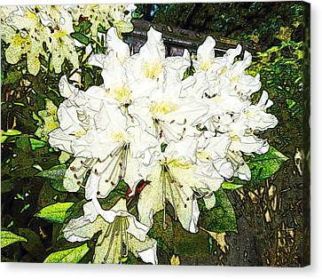 Canvas Print featuring the photograph White Rhodo Chalk by Laurie Tsemak
