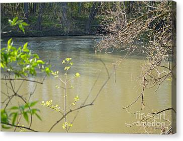 White River Canvas Print by Alys Caviness-Gober