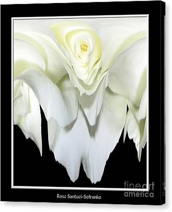 White Rose Abstract Canvas Print by Rose Santuci-Sofranko