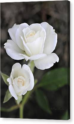 White Rose Duo Canvas Print