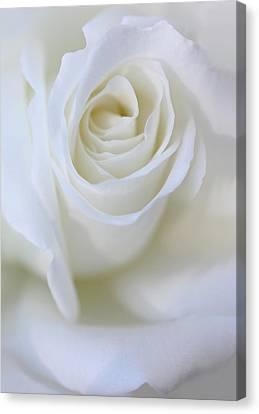 White Rose Floral Whispers Canvas Print by Jennie Marie Schell